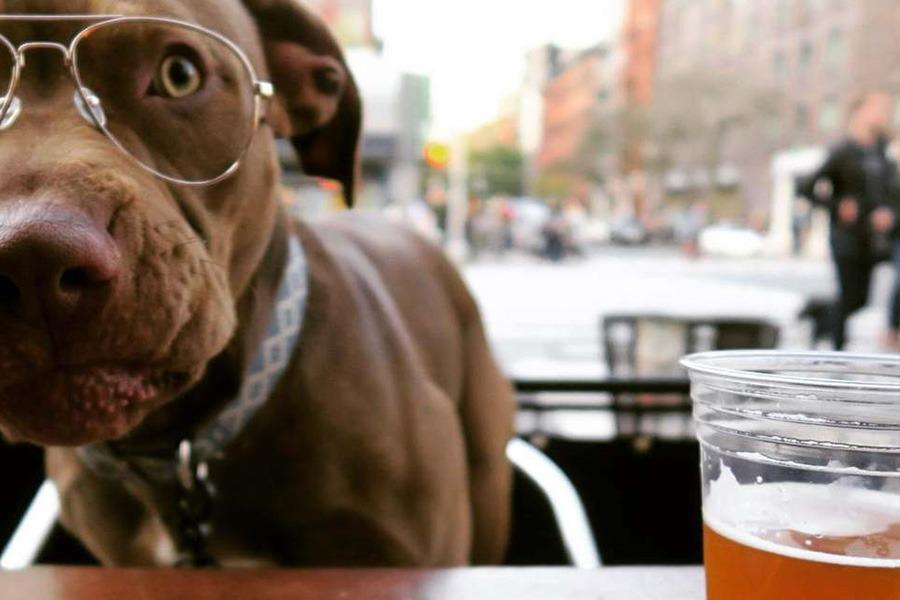 Пиво и животные