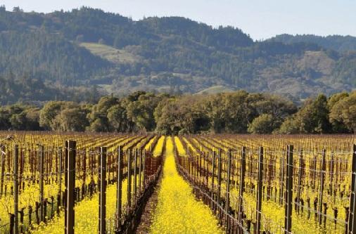 Виноградные регионы